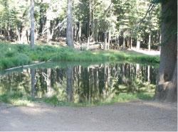 Leek Springs